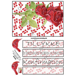 Konfirmation rose Dan Quick
